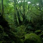 「森」と「林」の違いは?