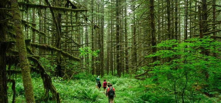「ハイキング」と「ピクニック」の違いは?