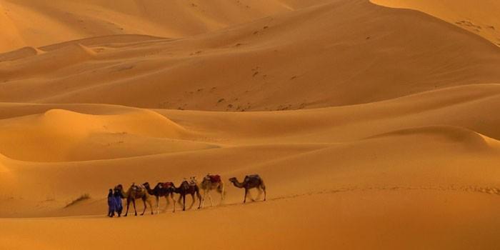 「砂漠」と「砂丘」の違いは?