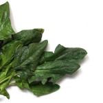 「ほうれん草」と「小松菜」の違いは?