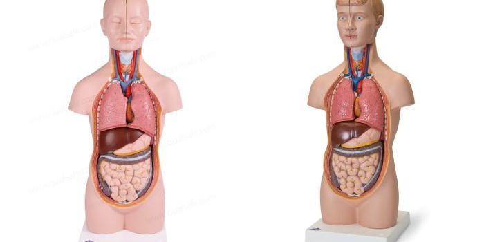 「内臓」と「内蔵」の違いは?