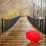 「雨季」と「梅雨」の違いは?