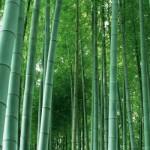 「竹」と「笹」の違いは?