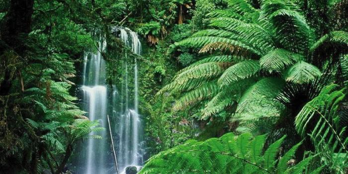 「ジャングル」と「アマゾン」の違いは?