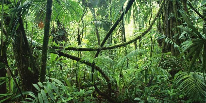 「熱帯雨林」と「ジャングル」の違いは?