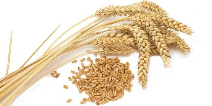 「小麦」と「大麦」の違いは?