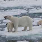 「北極」と「南極」の違いは?
