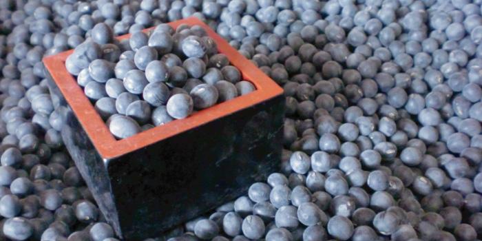 黒豆 (黒大豆・ぶどう豆)