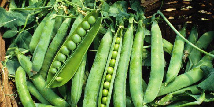 「えんどう豆」と「グリーンピース」の違いは?