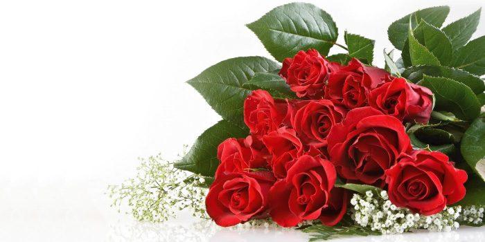 「薔薇(ばら)」と「茨(いばら)」の違いは?