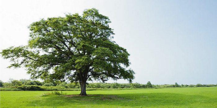 「広葉樹」と「針葉樹」の違いは?