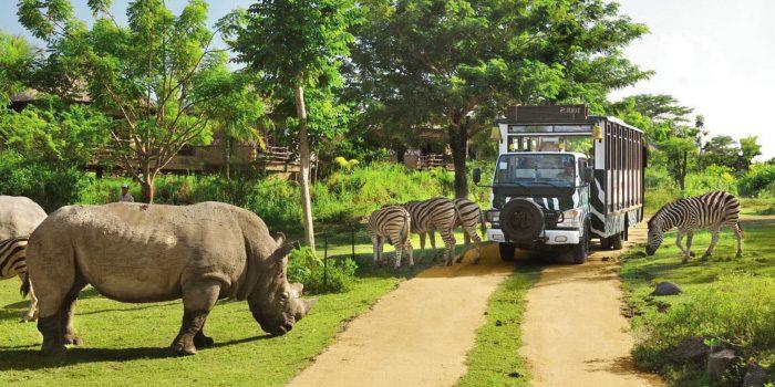 「動物園」と「サファリパーク」の違いは?
