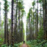 「高木」と「低木」の違いは?