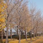 「落葉樹」と「常緑樹」の違いは?