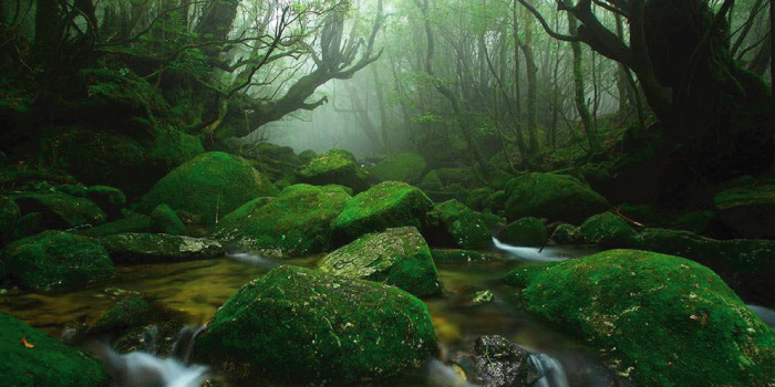 自然遺産 屋久島